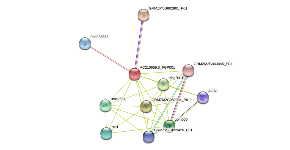 AC210669.3_FGP001 protein (Zea mays) - STRING interaction network