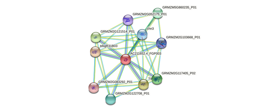 AC211652.4_FGP003 protein (Zea mays) - STRING interaction network