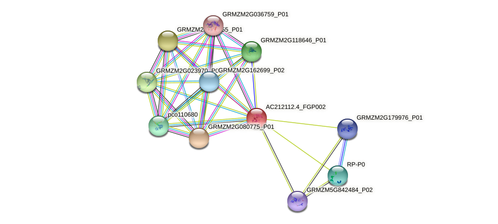 AC212112.4_FGP002 protein (Zea mays) - STRING interaction network