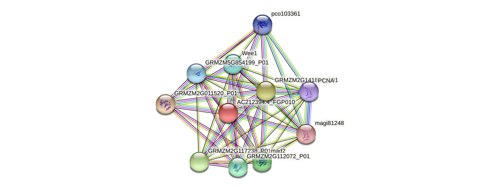 AC212394.4_FGP010 protein (Zea mays) - STRING interaction network