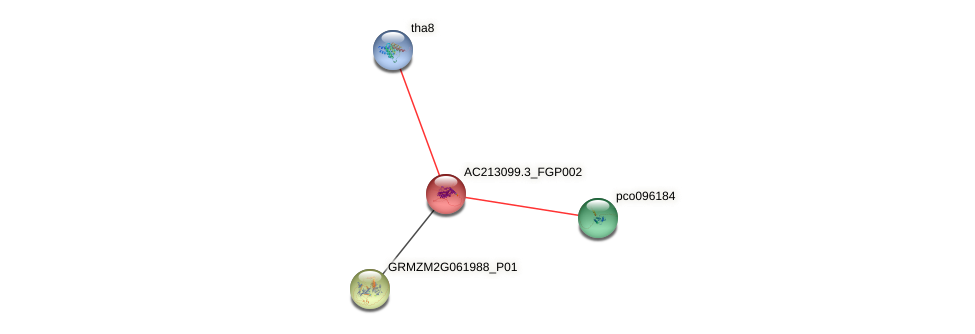 AC213099.3_FGP002 protein (Zea mays) - STRING interaction network