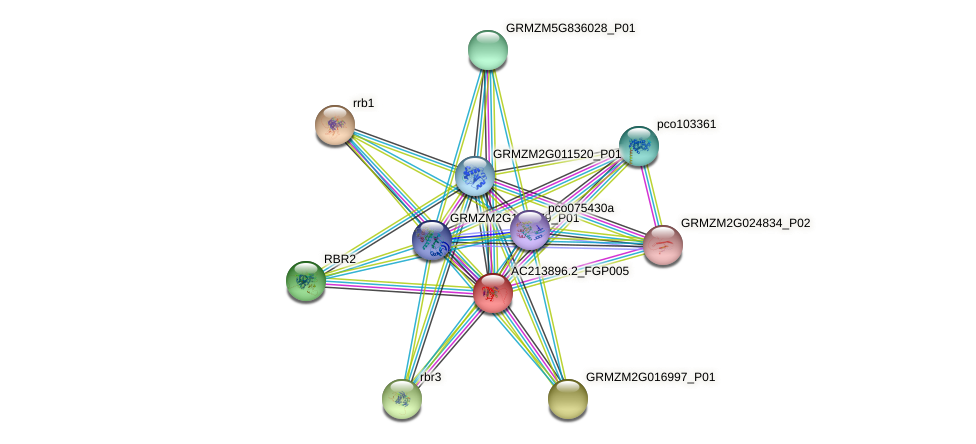 AC213896.2_FGP005 protein (Zea mays) - STRING interaction network