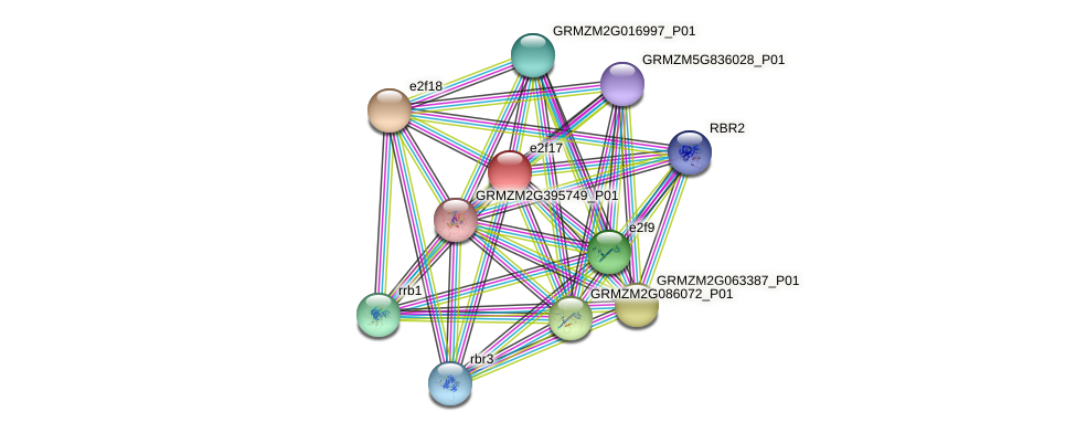 e2f17 protein (Zea mays) - STRING interaction network