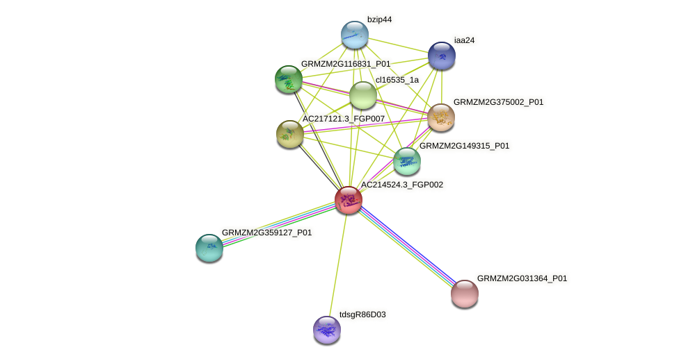 AC214524.3_FGP002 protein (Zea mays) - STRING interaction network