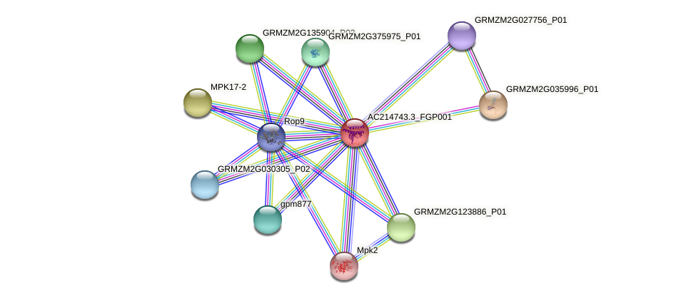 AC214743.3_FGP001 protein (Zea mays) - STRING interaction network