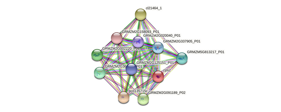 cps2 protein (Zea mays) - STRING interaction network