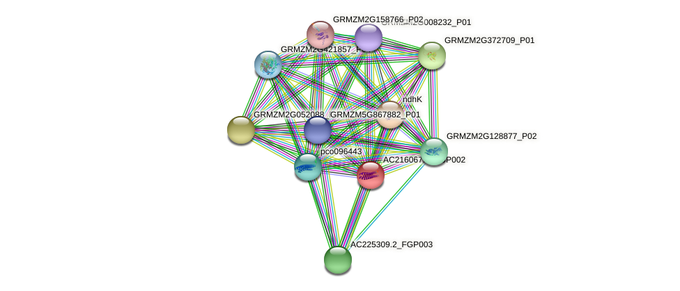 AC216067.3_FGP002 protein (Zea mays) - STRING interaction network