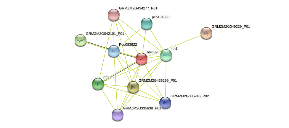 bhlh89 protein (Zea mays) - STRING interaction network