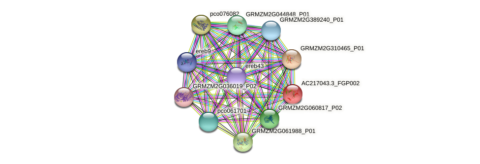 AC217043.3_FGP002 protein (Zea mays) - STRING interaction network