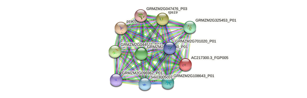 AC217300.3_FGP005 protein (Zea mays) - STRING interaction network