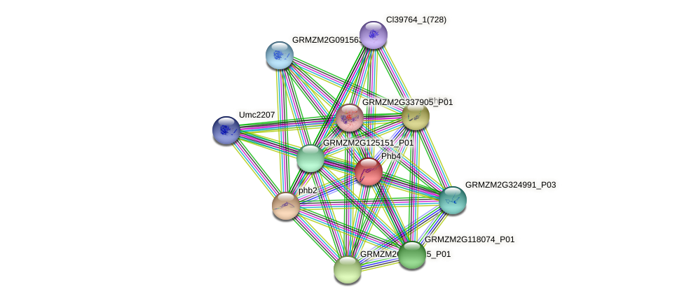 Zm.74300 protein (Zea mays) - STRING interaction network