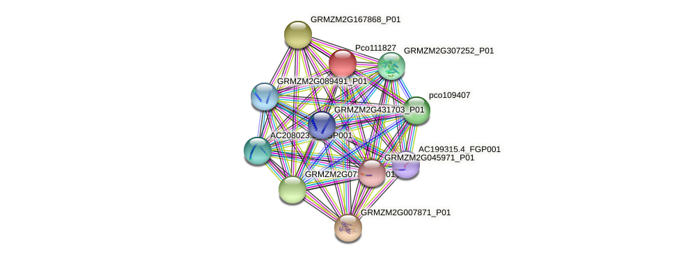 pco111827 protein (Zea mays) - STRING interaction network