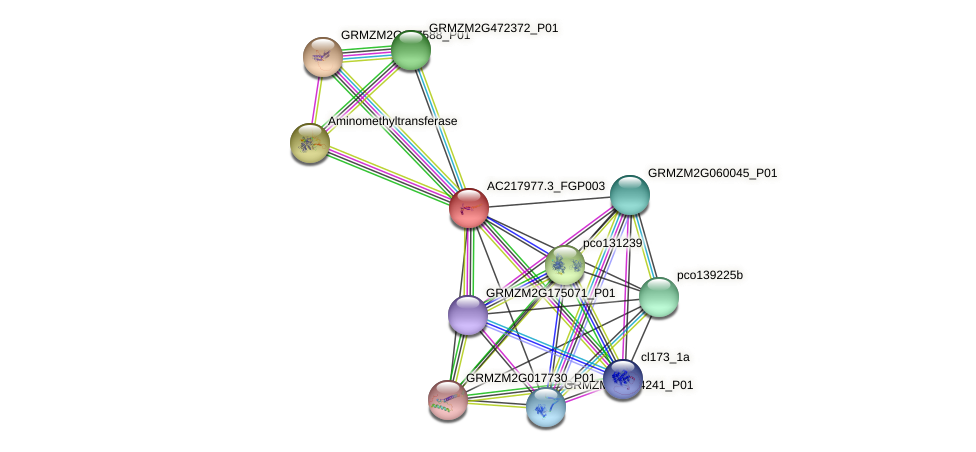 AC217977.3_FGP003 protein (Zea mays) - STRING interaction network