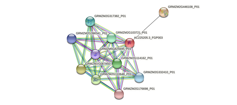 AC225205.3_FGP003 protein (Zea mays) - STRING interaction network