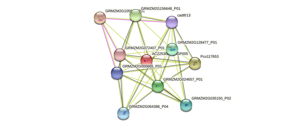 AC225308.2_FGP005 protein (Zea mays) - STRING interaction network