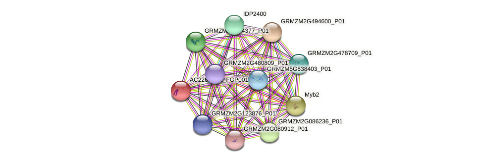 AC226552.2_FGP001 protein (Zea mays) - STRING interaction network