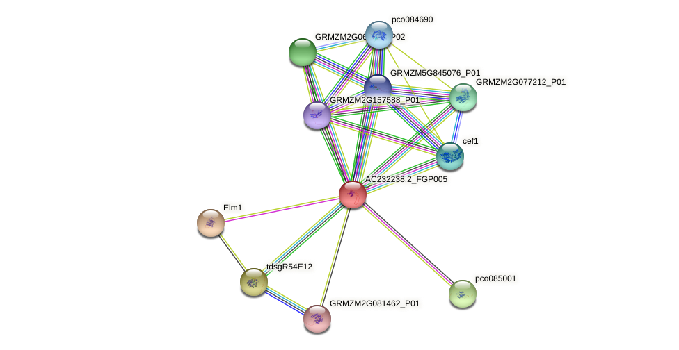 AC232238.2_FGP005 protein (Zea mays) - STRING interaction network