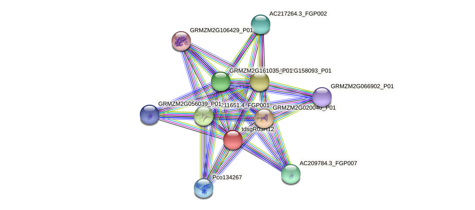 AC232321.1_FGP008 protein (Zea mays) - STRING interaction network