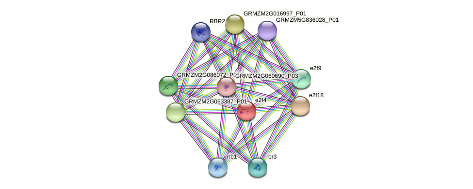 e2f4 protein (Zea mays) - STRING interaction network