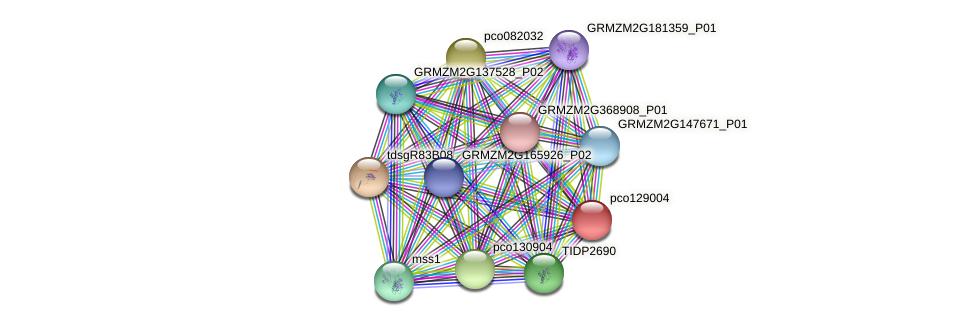 pco129004 protein (Zea mays) - STRING interaction network