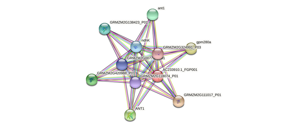 Zm.43483 protein (Zea mays) - STRING interaction network