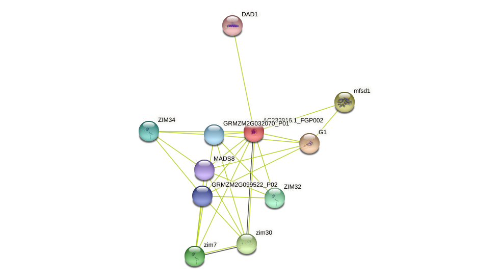 AC233916.1_FGP002 protein (Zea mays) - STRING interaction network