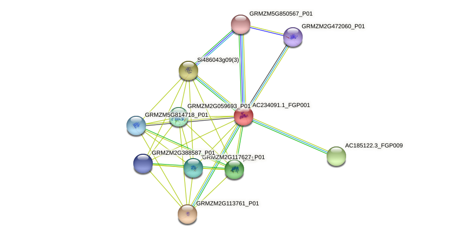 AC234091.1_FGP001 protein (Zea mays) - STRING interaction network