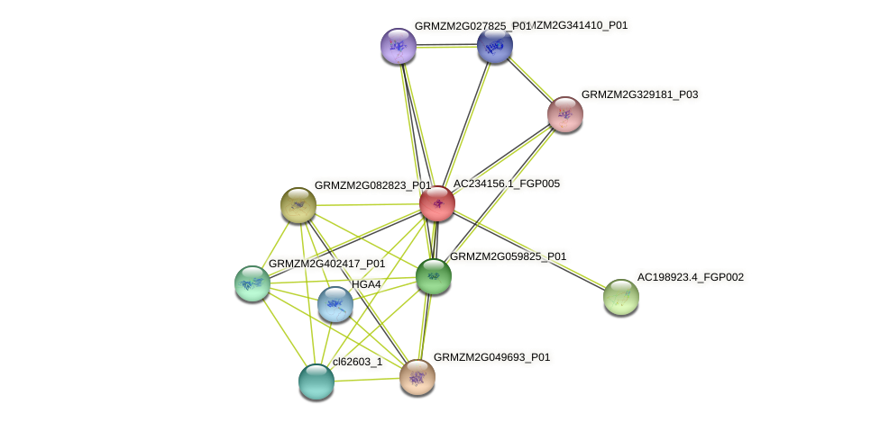AC234156.1_FGP005 protein (Zea mays) - STRING interaction network