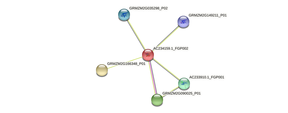 AC234159.1_FGP002 protein (Zea mays) - STRING interaction network