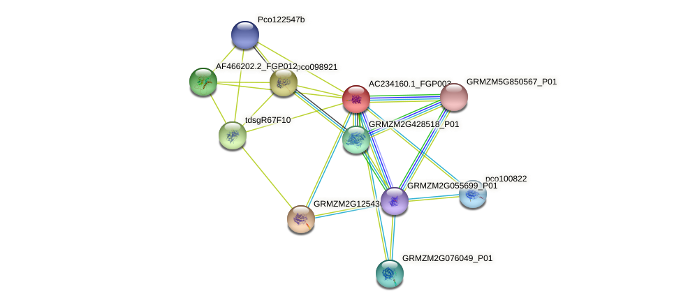 AC234160.1_FGP003 protein (Zea mays) - STRING interaction network