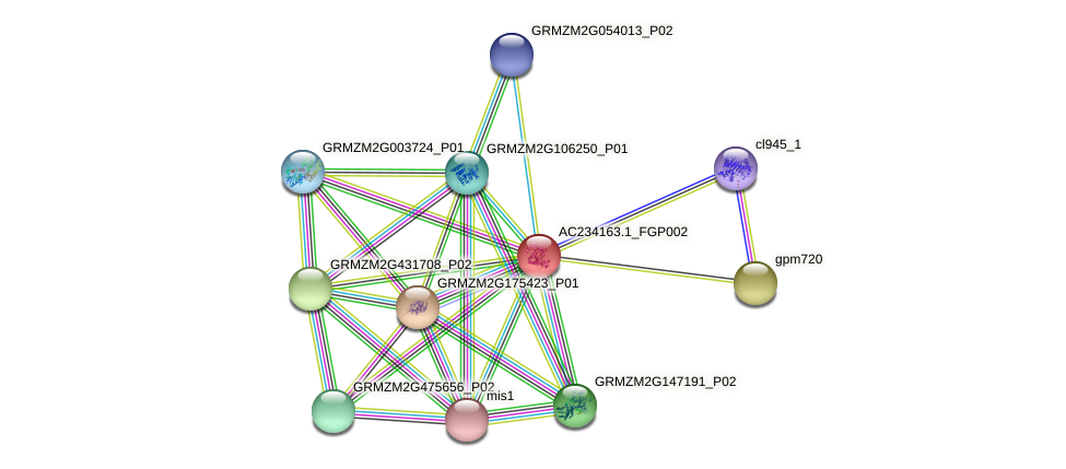 AC234163.1_FGP002 protein (Zea mays) - STRING interaction network