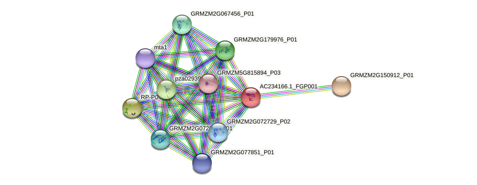AC234166.1_FGP001 protein (Zea mays) - STRING interaction network