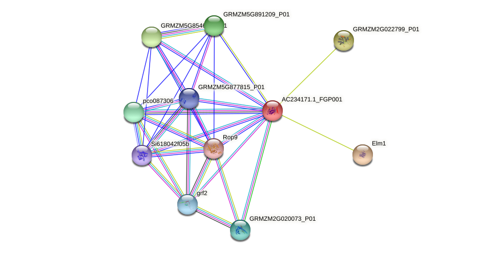 AC234171.1_FGP001 protein (Zea mays) - STRING interaction network