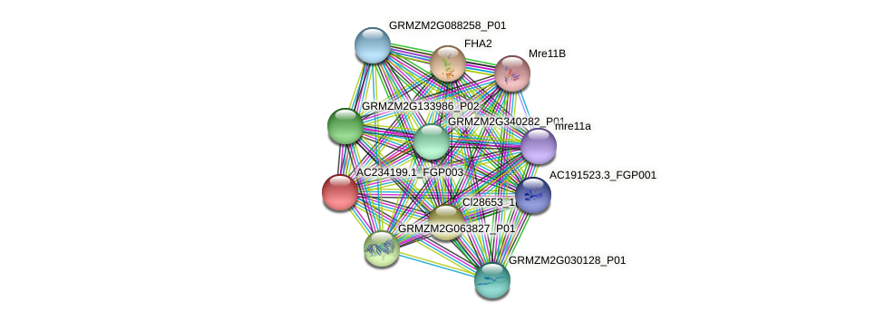 AC234199.1_FGP003 protein (Zea mays) - STRING interaction network
