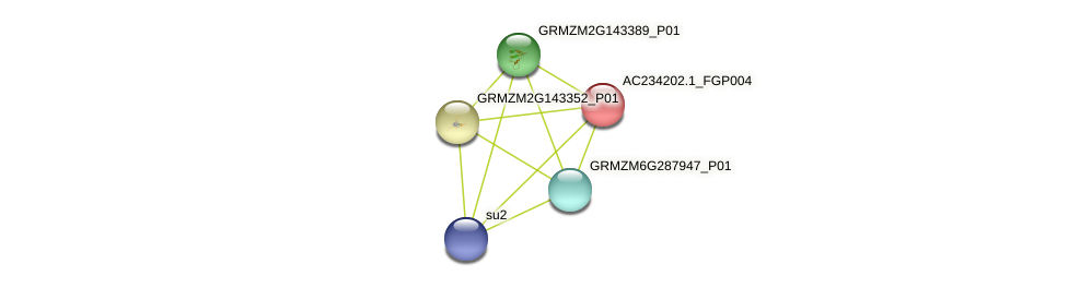 AC234202.1_FGP004 protein (Zea mays) - STRING interaction network