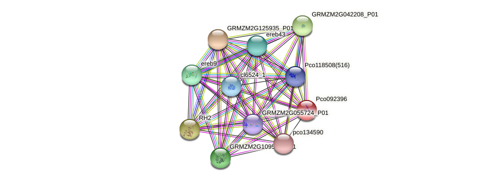 AC234203.1_FGP009 protein (Zea mays) - STRING interaction network