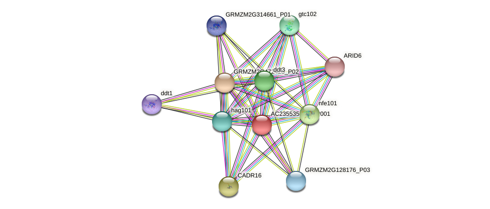 AC235535.1_FGP001 protein (Zea mays) - STRING interaction network