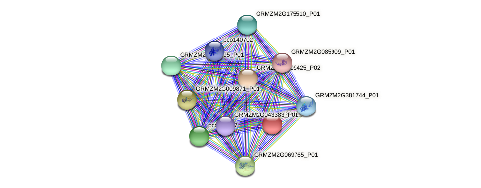 cl2646_1 protein (Zea mays) - STRING interaction network