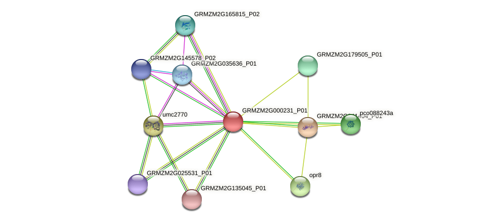 GRMZM2G000231_P01 protein (Zea mays) - STRING interaction network