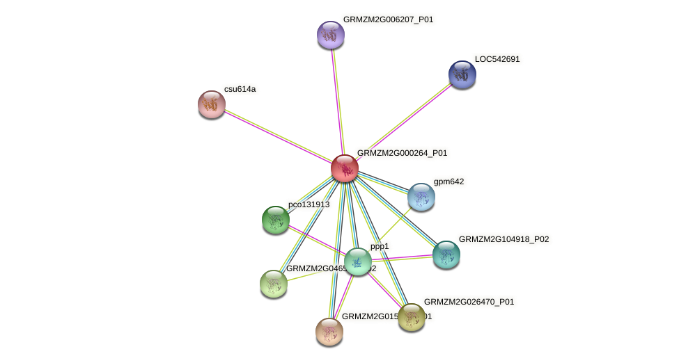 GRMZM2G000264_P01 protein (Zea mays) - STRING interaction network