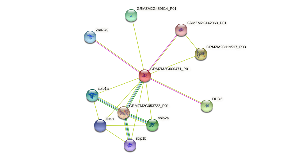 GRMZM2G000471_P01 protein (Zea mays) - STRING interaction network
