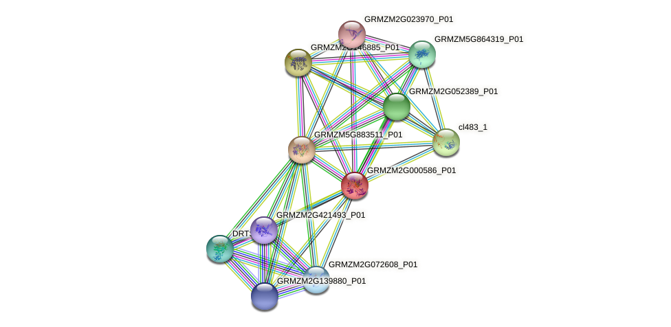 GRMZM2G000586_P01 protein (Zea mays) - STRING interaction network