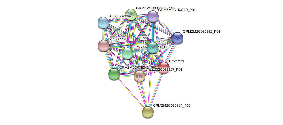 Zm.85547 protein (Zea mays) - STRING interaction network