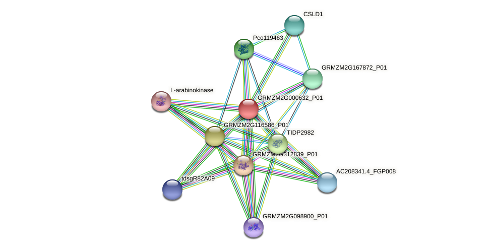 GRMZM2G000632_P01 protein (Zea mays) - STRING interaction network