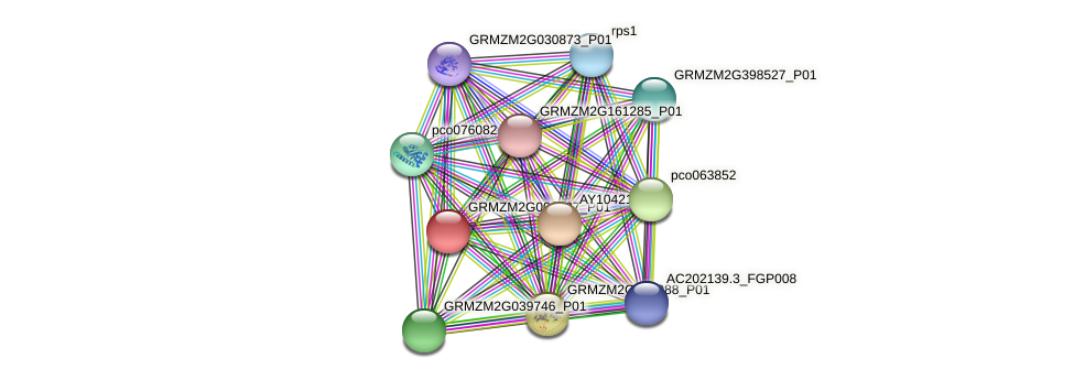 GRMZM2G000737_P01 protein (Zea mays) - STRING interaction network