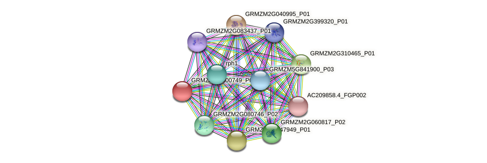 GRMZM2G000749_P01 protein (Zea mays) - STRING interaction network