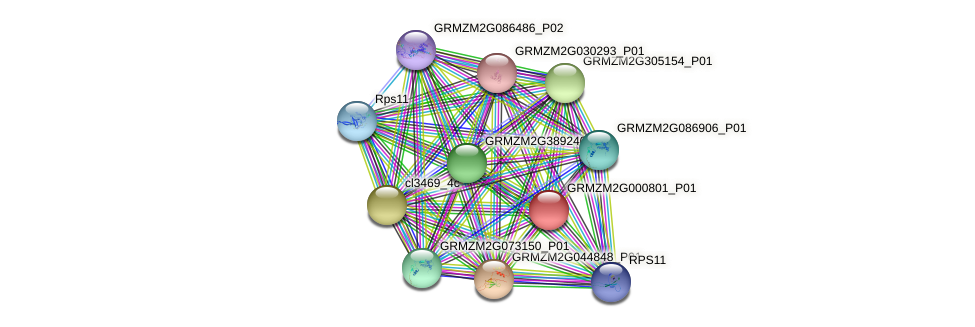 GRMZM2G000801_P01 protein (Zea mays) - STRING interaction network