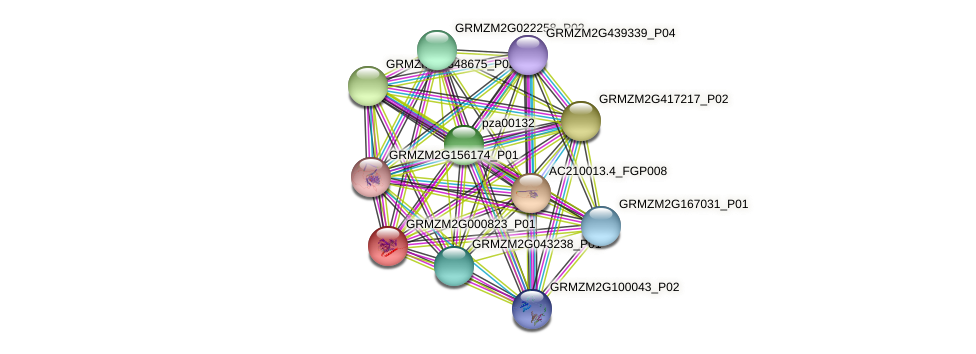 GRMZM2G000823_P01 protein (Zea mays) - STRING interaction network