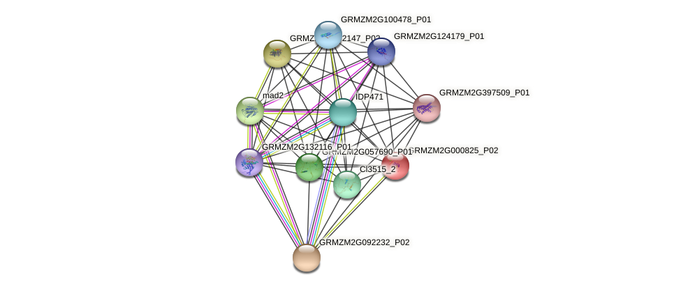 GRMZM2G000825_P02 protein (Zea mays) - STRING interaction network