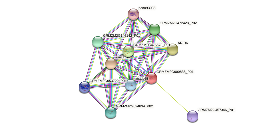 GRMZM2G000836_P01 protein (Zea mays) - STRING interaction network
